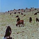 Scène pastorale dans le sud Jordanien