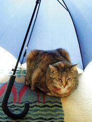 sch... regen ...
