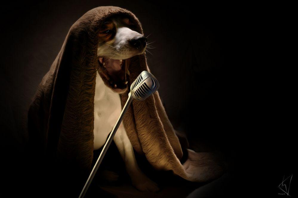 Schaaalaalalaaaaaa - the voice -