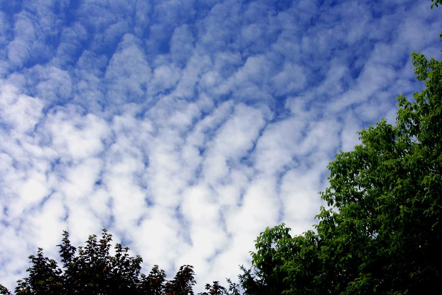 Schäfchen-Wolken...