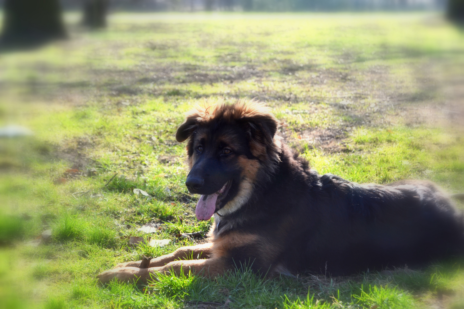 Schäfer sein Hund,Schäferhund
