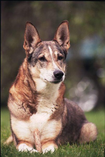 Schäferhundmichling am Wegesrand