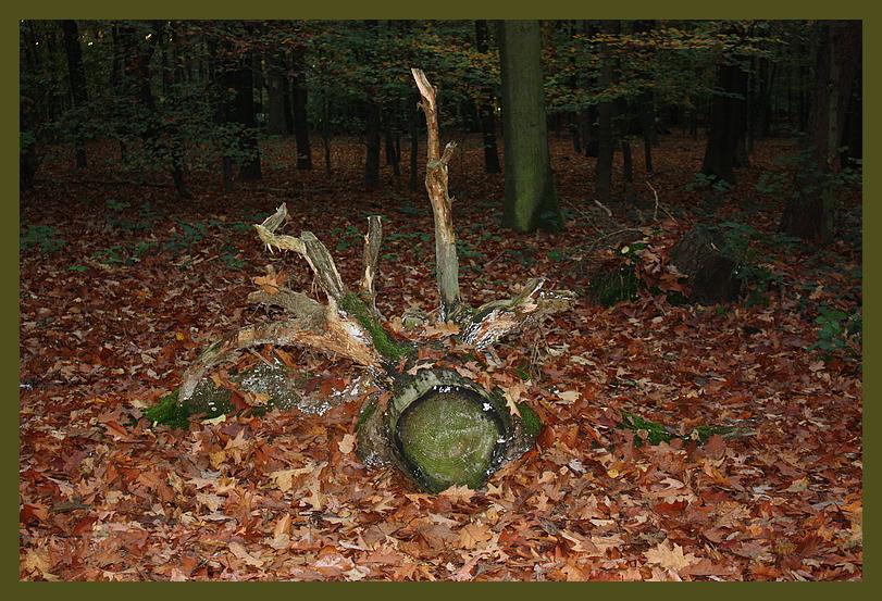 Schätze des Waldes