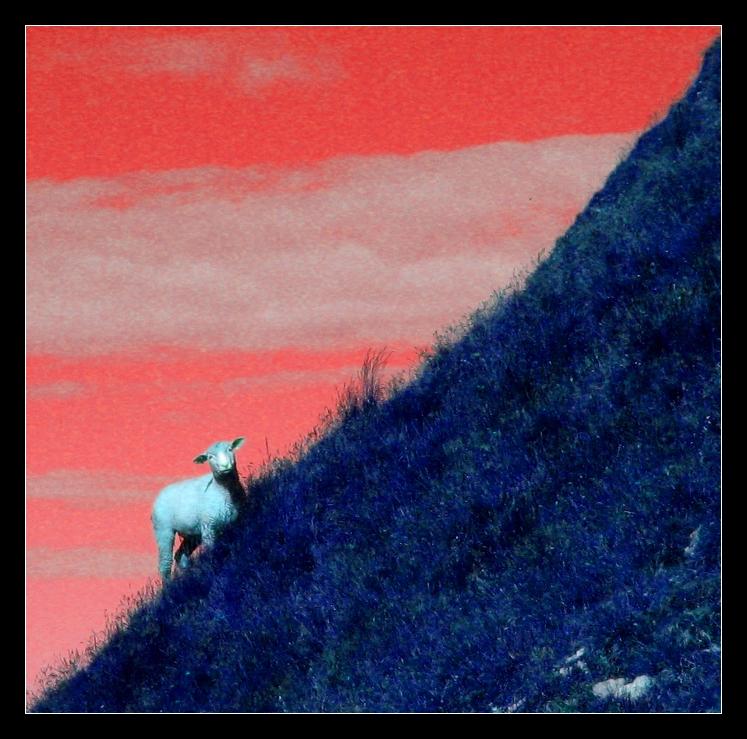 Schaf am Steilhang