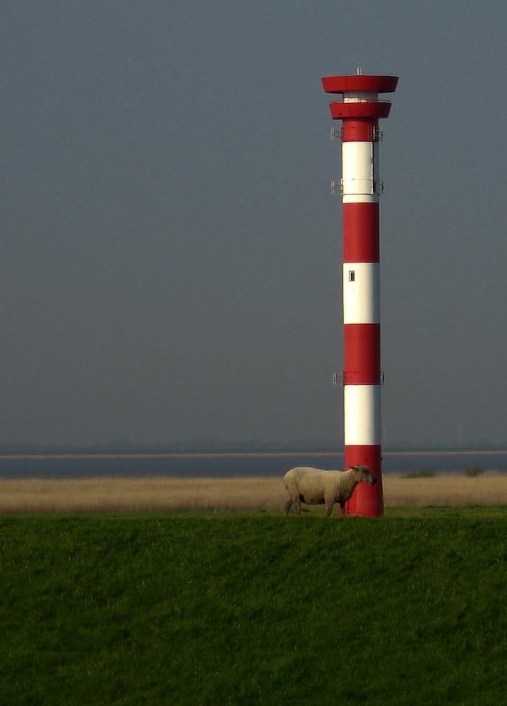 Schaf vor Leuchturm