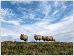 Schafe am Huntedeich