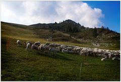 Schafe am Monte Baldo
