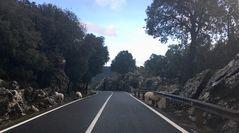 Schafe - in 800m Höhe ;-)