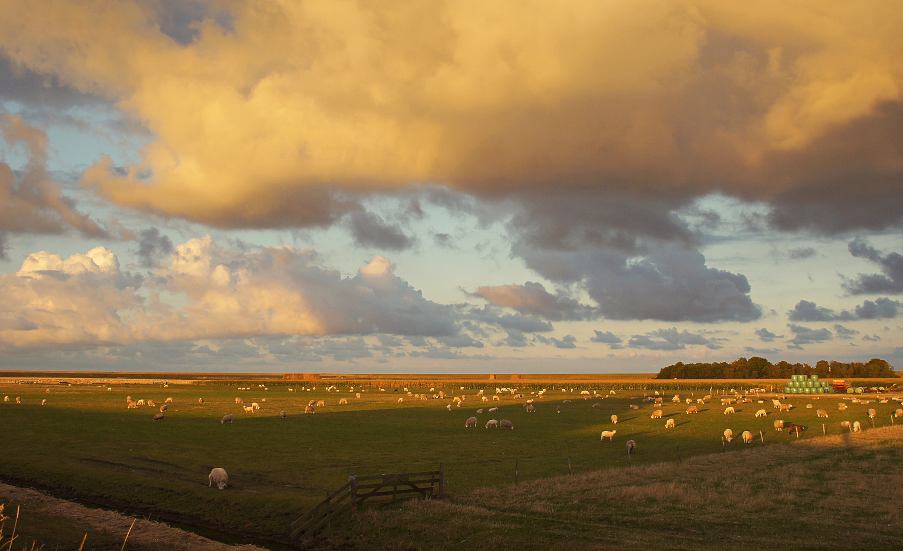 Schafe, Schafe,...