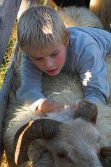 Schafe sortieren #3