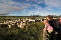 Schafe sortieren #5