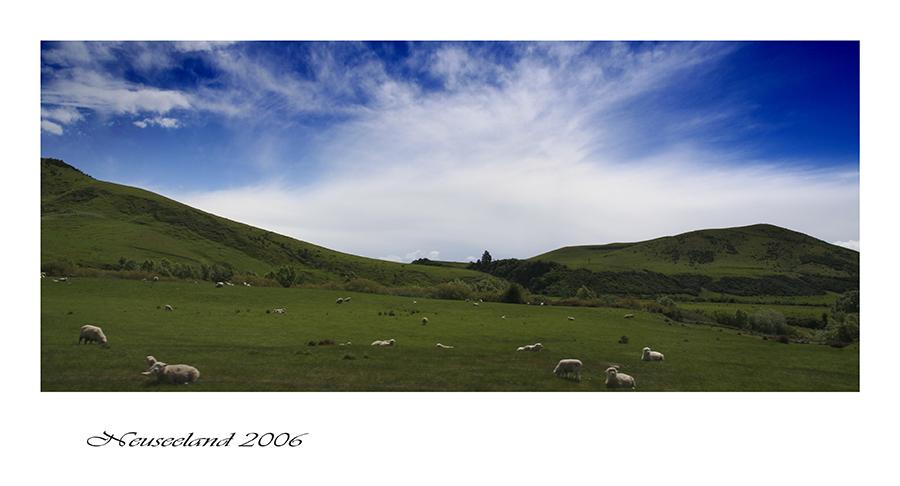 Schafe was sonst