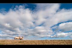 Schafes Wetter...