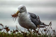 Schaffe , schaffe Nest bauen