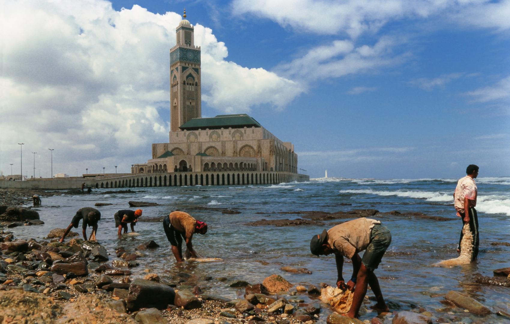 Schaffellwäsche in Casablanca