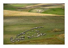 Schafsherde in der Piano Grande (2)