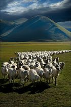 Schafsherde in der Piano Grande (3)