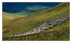 Schafsherde in der Piano Grande (4)