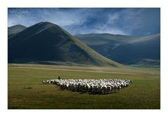 Schafsherde in der Piano Grande