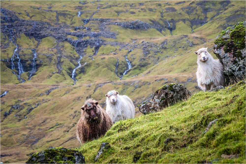 Schafsinseln..