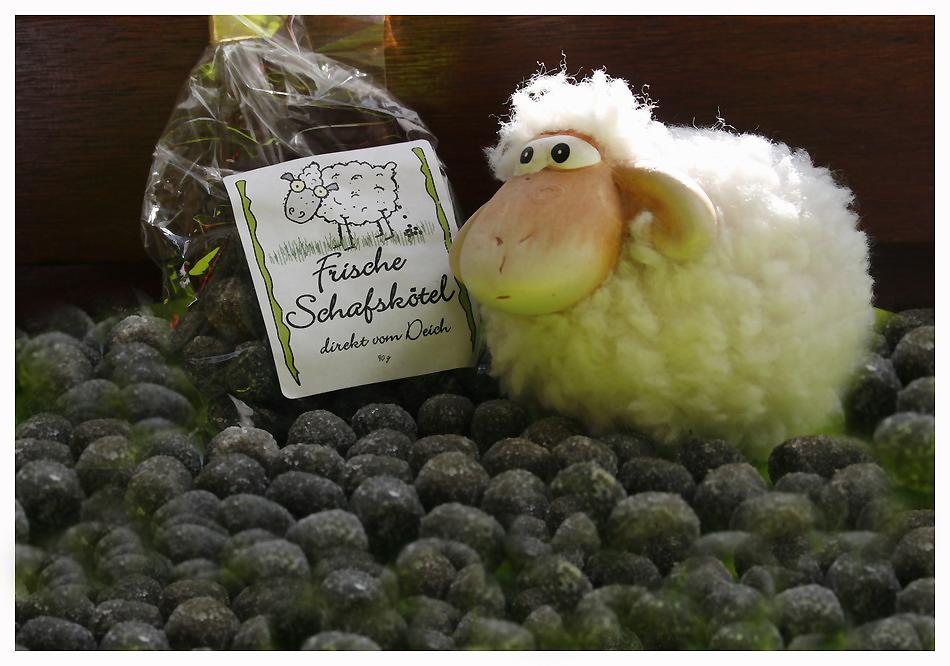 Schafskötel frisch vom Deich