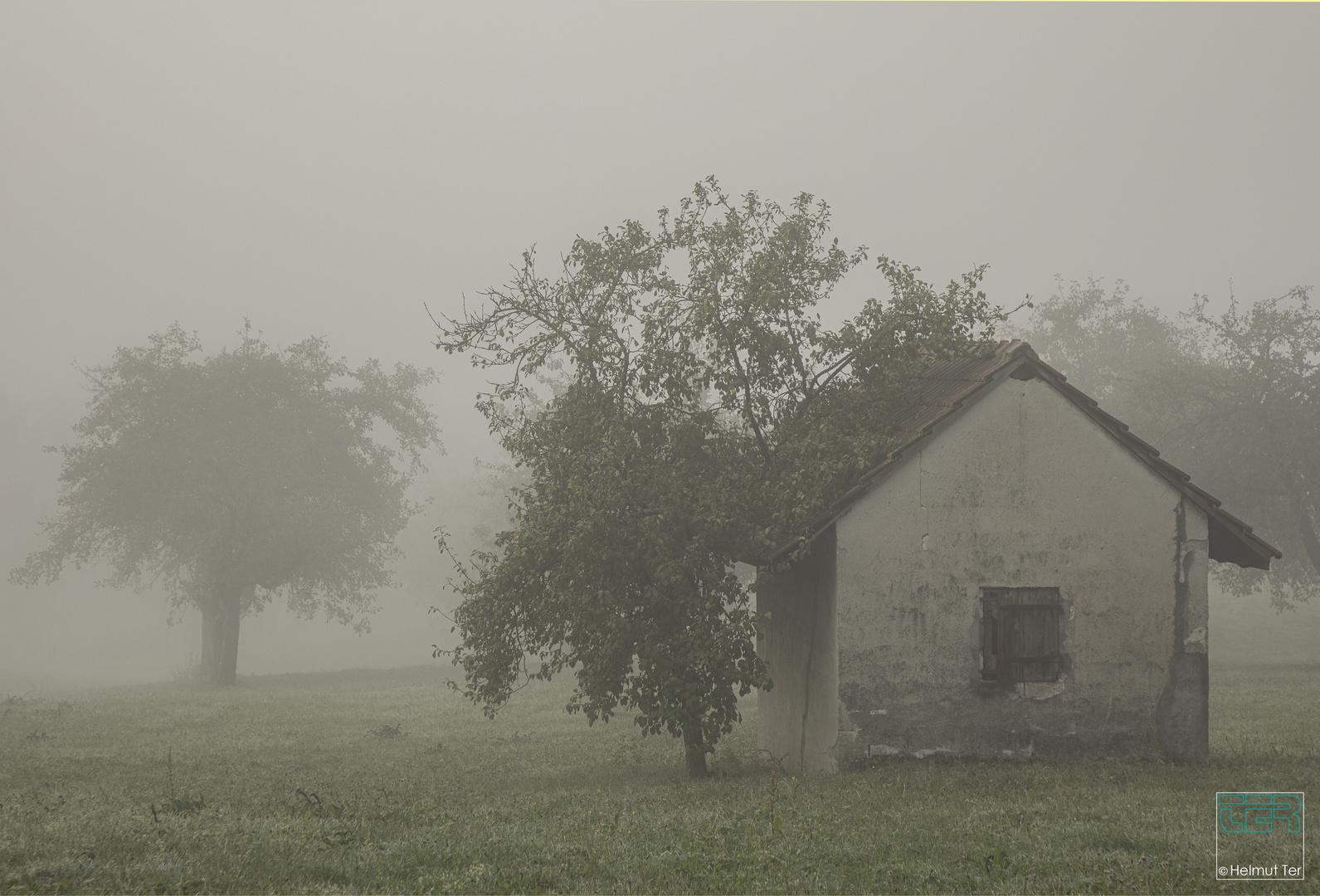 Schafstall im Morgennebel