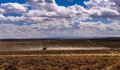 Schaftrieb, Wyoming, USA
