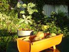 Schale im Garten