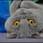 Schalk im Katzenpelz