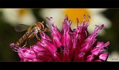 Scharfe LAGA-Fliege