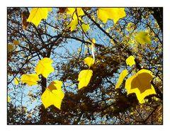 Schatten-Blätter