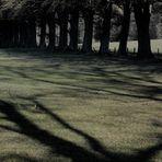 Schatten ... Greifen