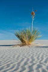 Schatten im Sand