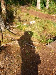 Schatten im Wald...