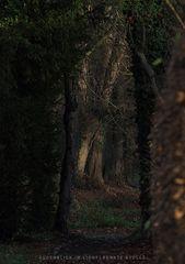 Schatten - Wege ...