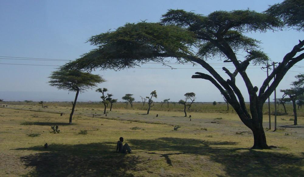 Schatten Baum