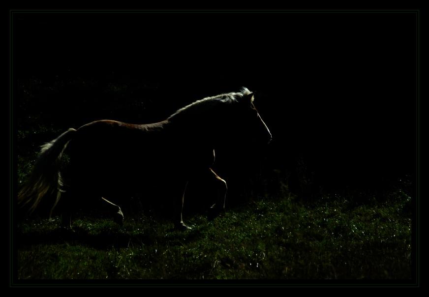 Schattenpferd