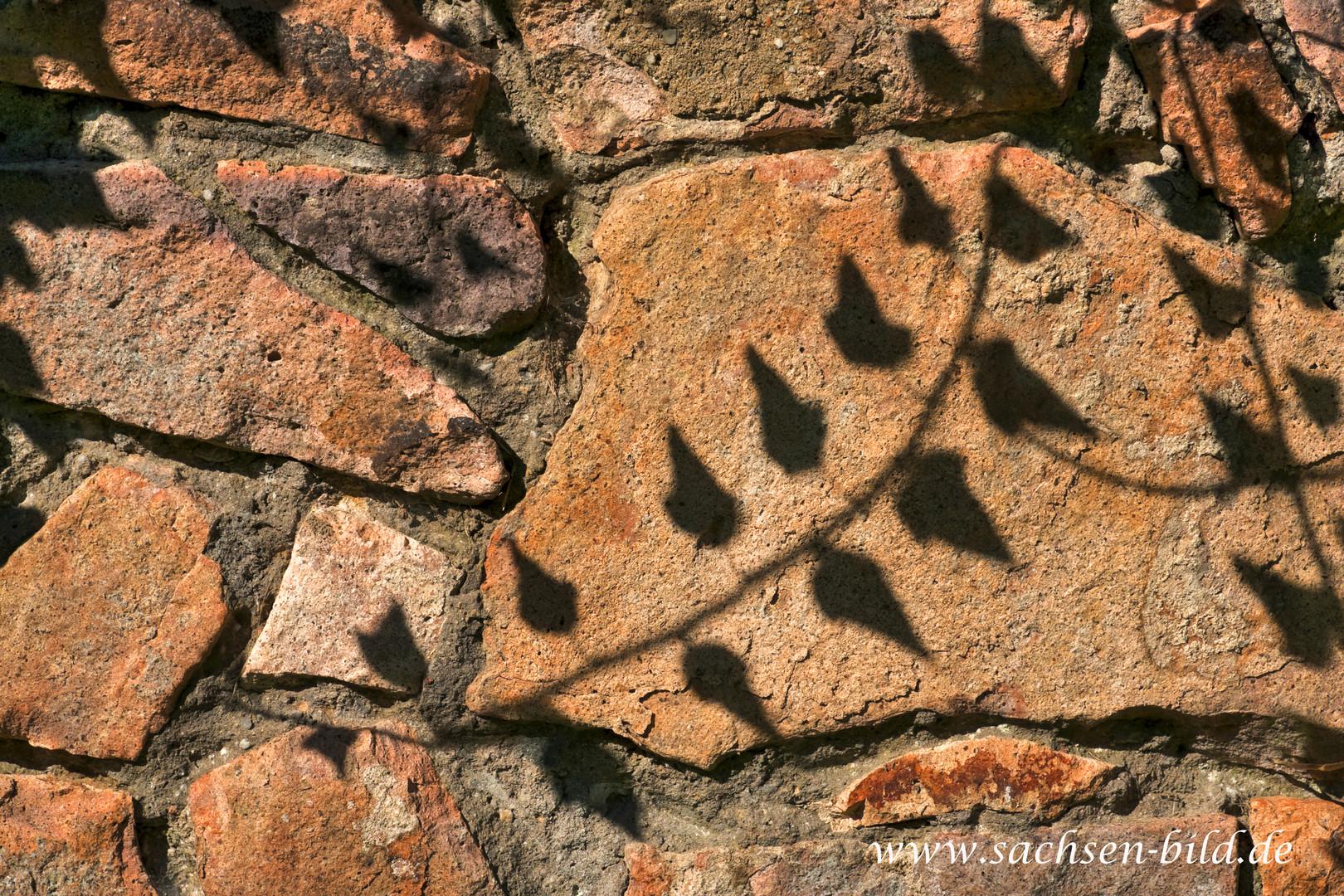 Schattenpflanze