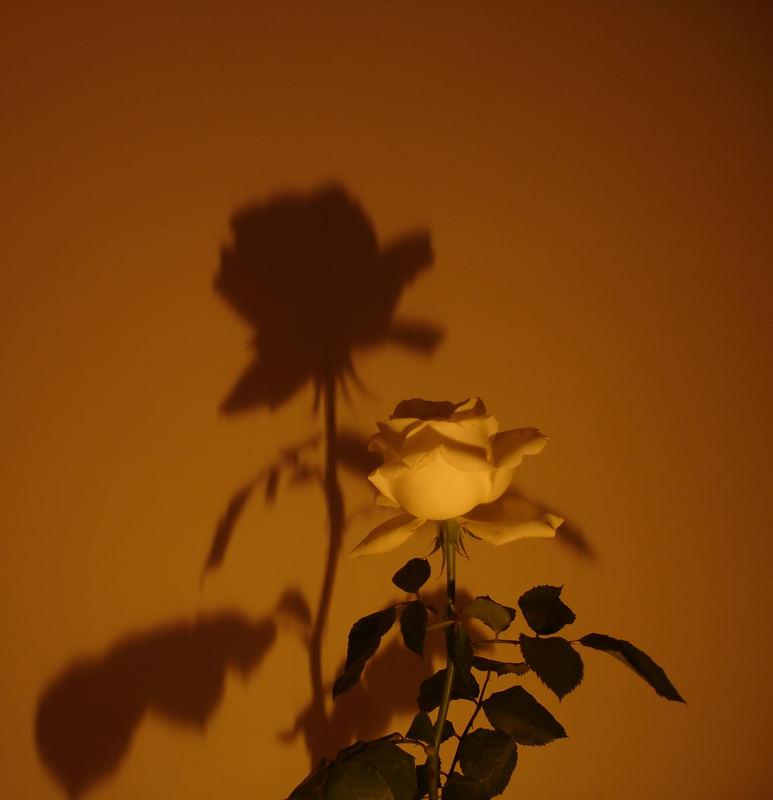 Schattenspender