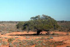 Schattenspender im Outback
