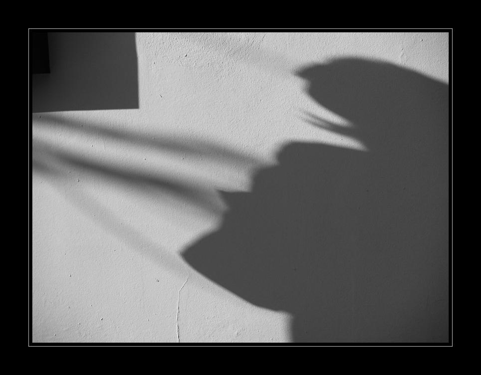 Schattenspiel VII