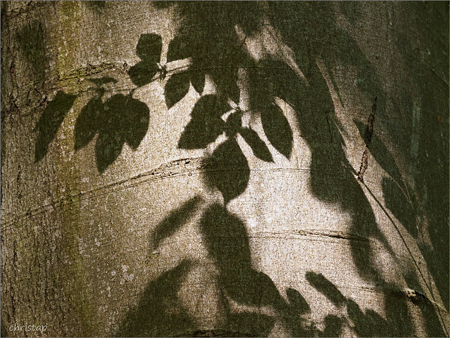 Schattenspiele ...