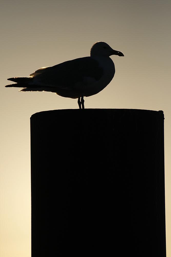 Schattenvogel 2