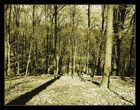 Schattenwald
