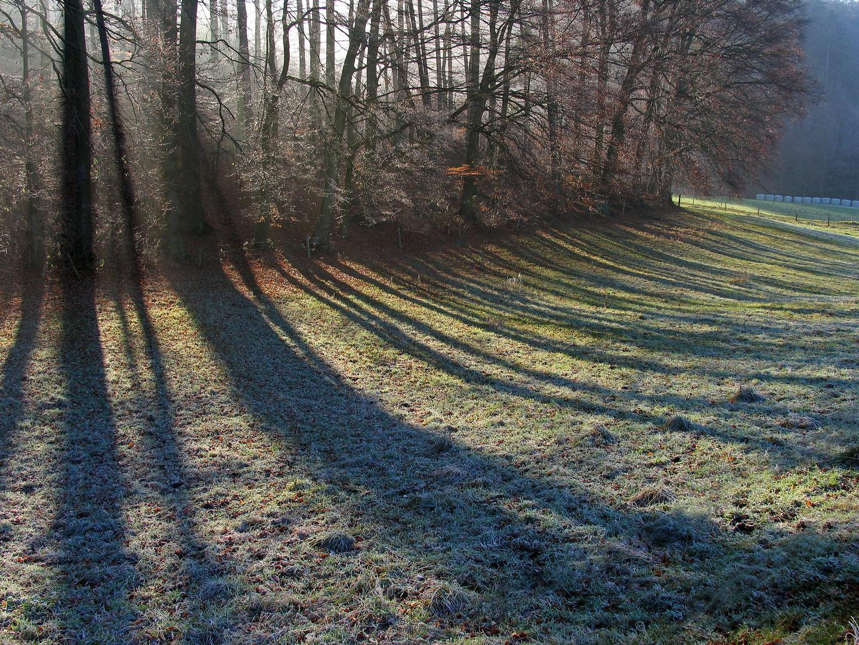 Schattenwiese