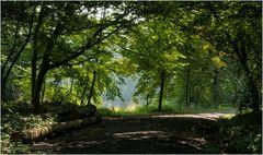 Schattiger Waldweg...