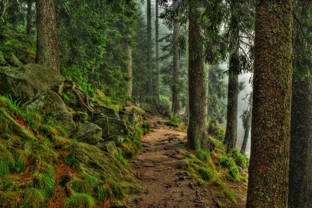 Schatzhauser im grünen Tannenwald...