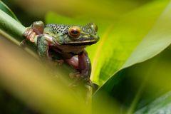 Schatzinsel der Artenvielfalt