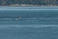 Schau da springt ein Orka     DSC_1077-2_bearbeitet-1