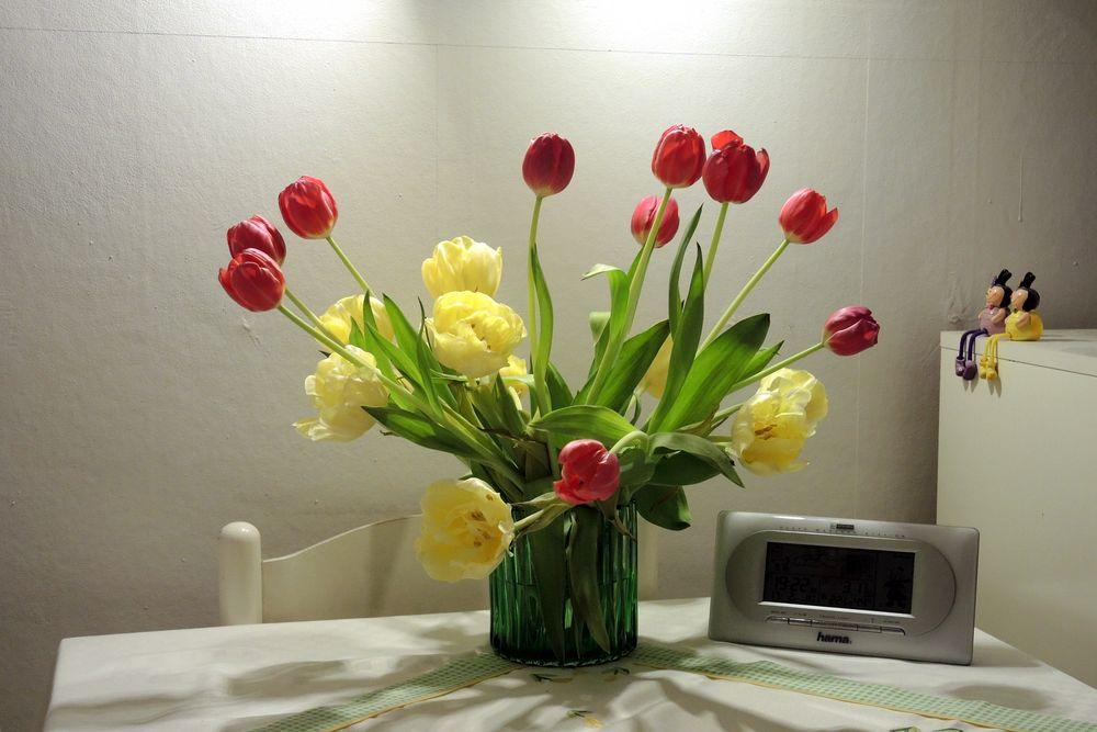 ... schau, die Tulpen....